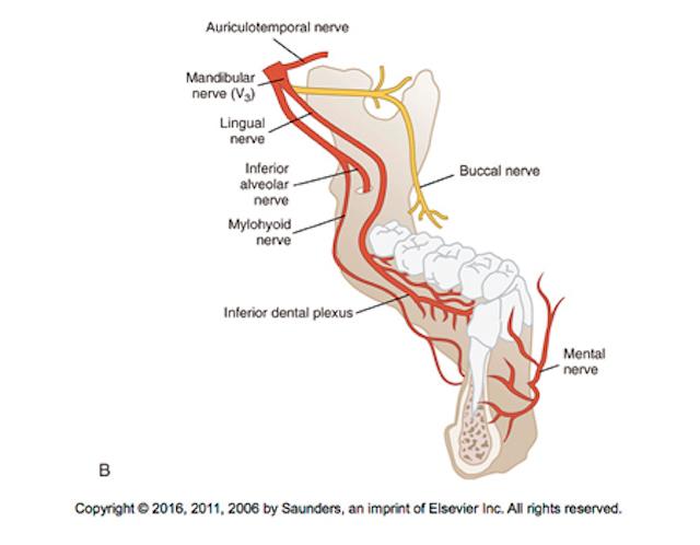 The underused block: The Vazirani-Akinosi mandibular block is a