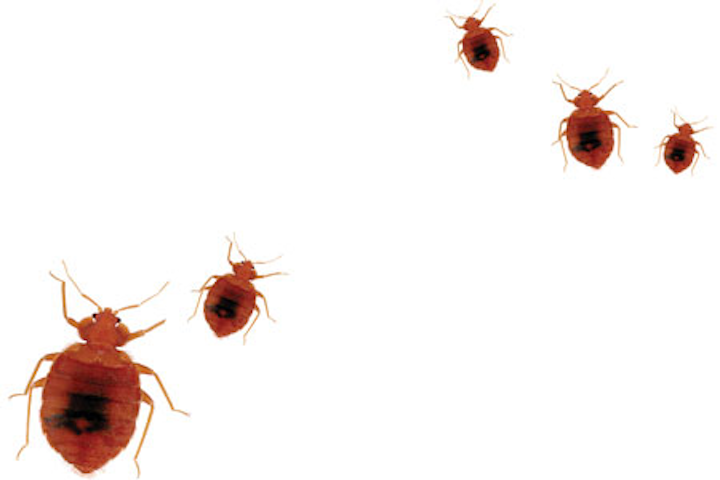Pleasant Bed Bugs In The Dental Office Steps To Take To Prevent Home Interior And Landscaping Spoatsignezvosmurscom